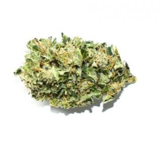 ACAPULCO GOLD SATIVA